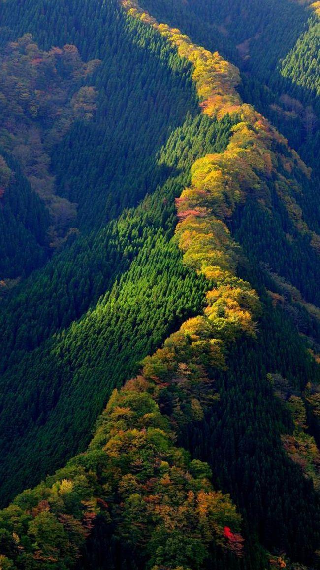 árboles de japón
