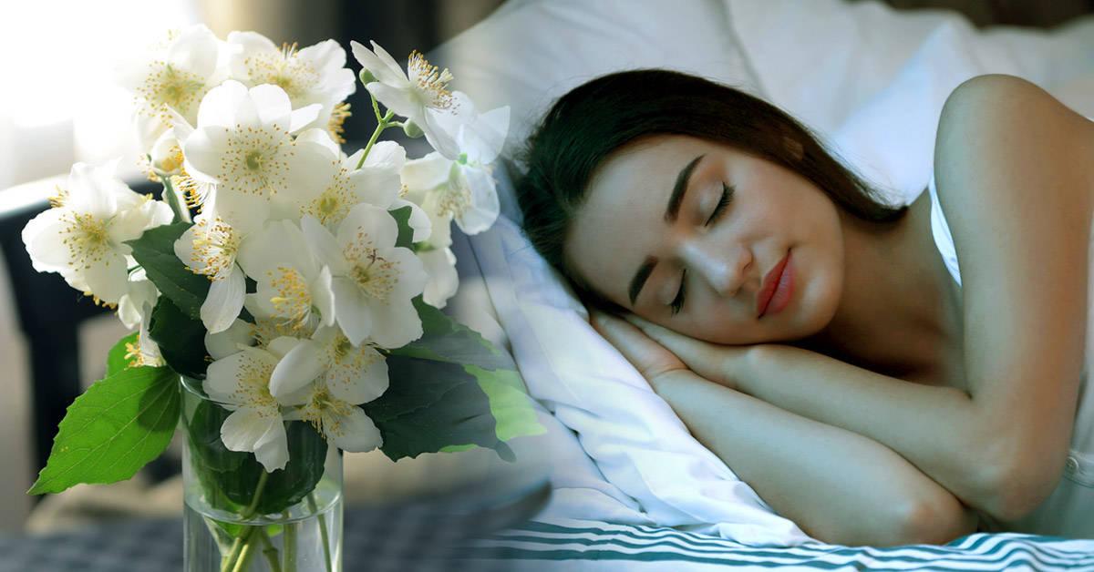 Coloca estas plantas en tu dormitorio para mejorar tu salud