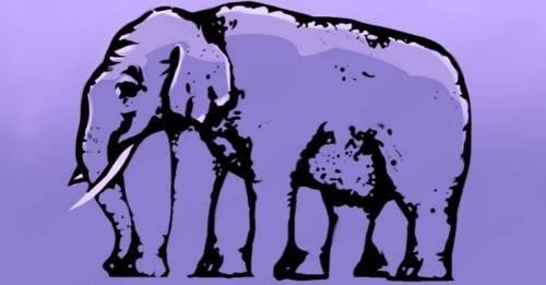 La solución al acertijo visual: ¿Cuántas patas tiene el elefante?