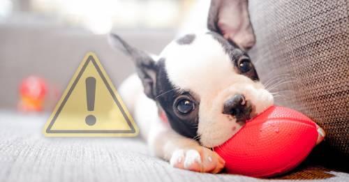 ¿Qué hacer si mi perro deja de respirar?