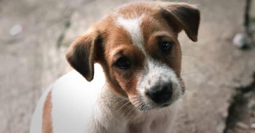 ¿Por qué tu perro come heces y cómo puedes protegerlo de los efectos de este hábito dañino?