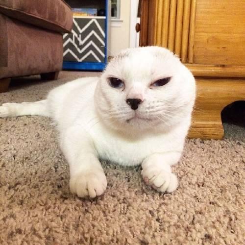 Nadie lo quería, pero ella adoptó a este gatito sordo y logró superar su an..