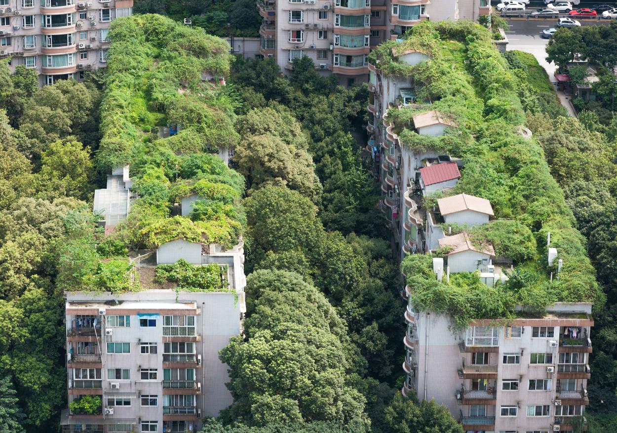 Ideas prácticas para tener ciudades más sustentables