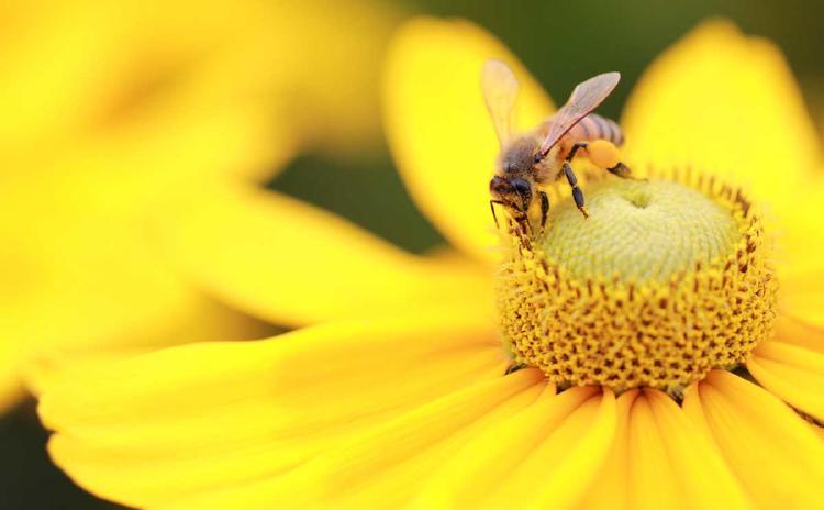 abeja flor 1