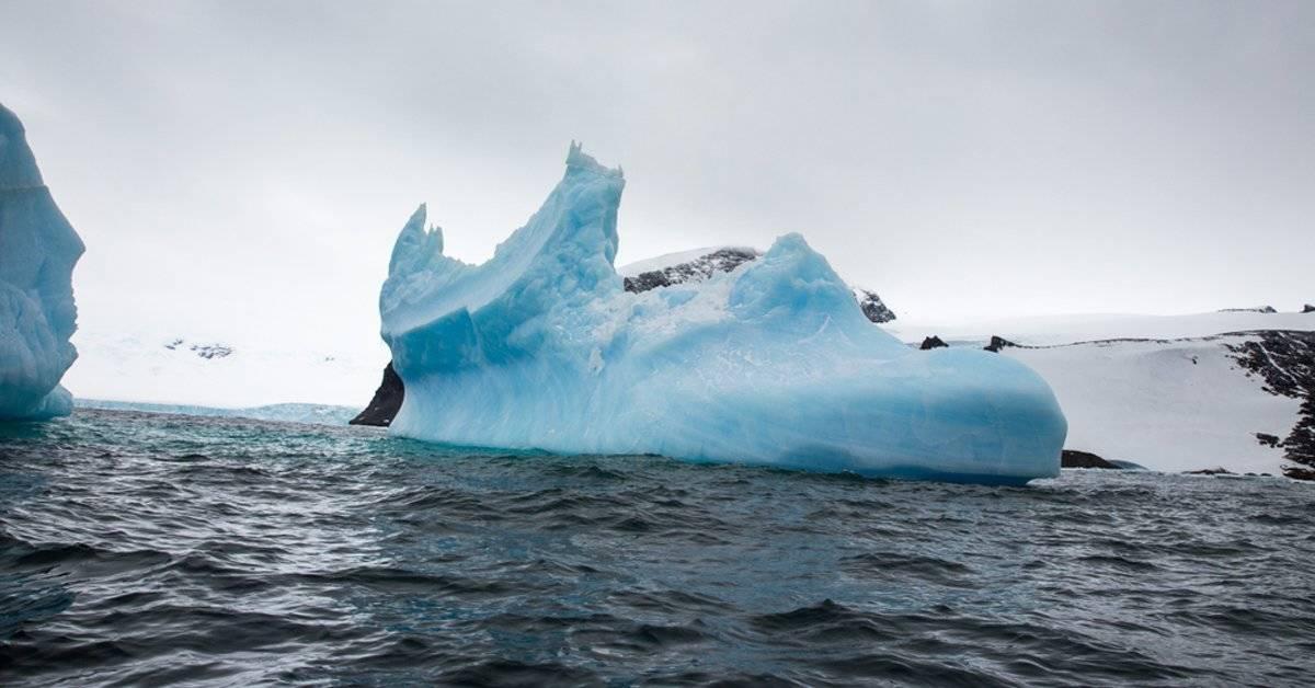 Creyeron que era una foca en un iceberg, pero se sorprendieron al descubrir la realidad