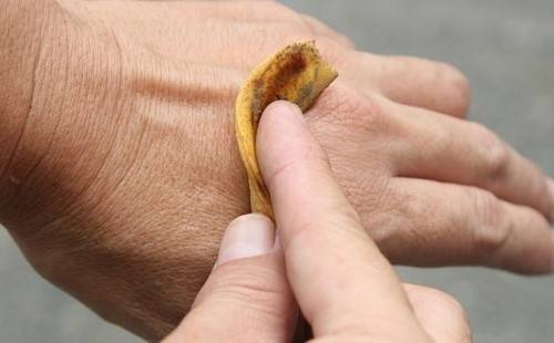 6 usos asombrosos de la cáscara de la banana