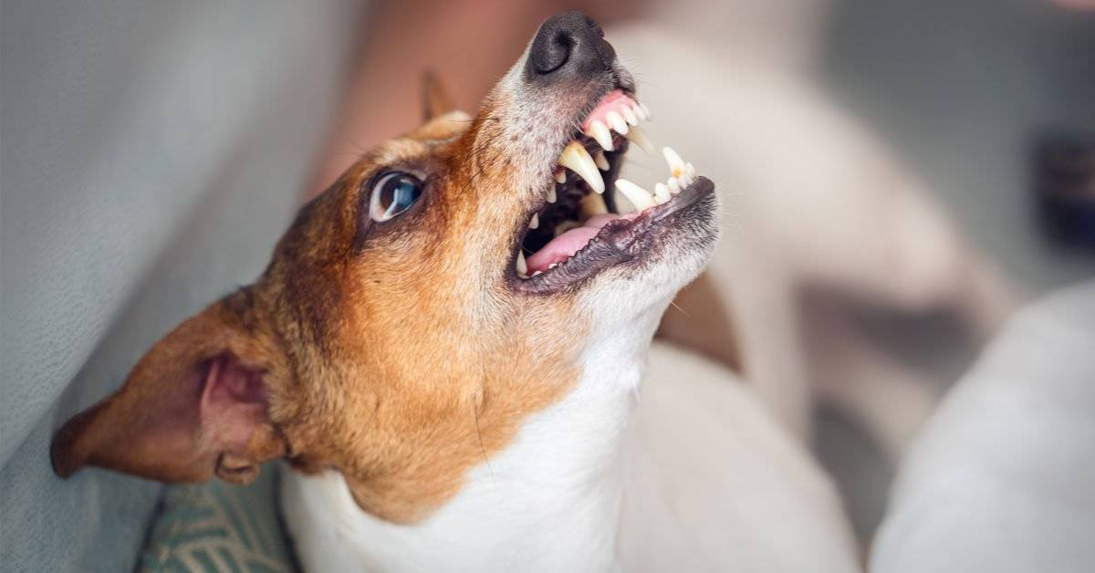 ¿Puede tu personalidad afectar a la de tu mascota?