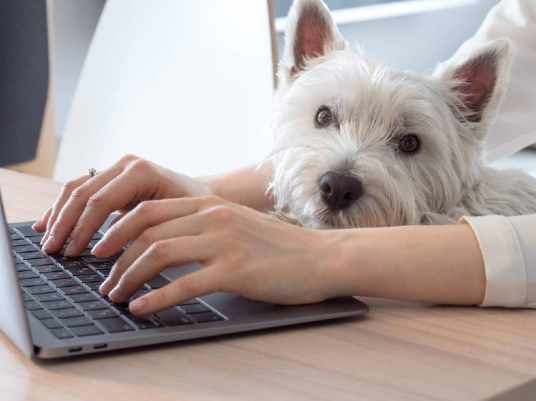 perro computadora