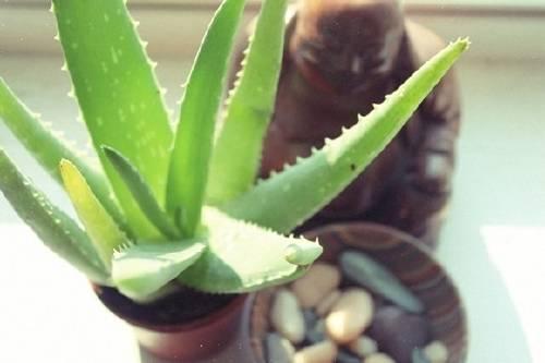 5 plantas super resistentes para quienes no tienen tiempo que dedicarle al jar..