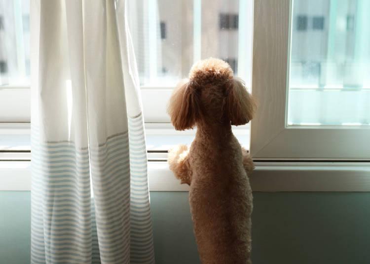 perro esperando a que su dueño regrese a casa