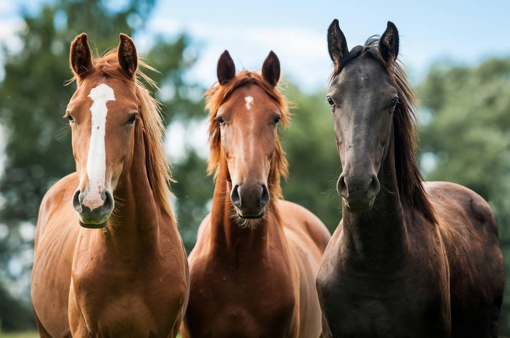 ¿Qué caballo te atrae más? El que escojas te dará un mensaje sobre tu suerte