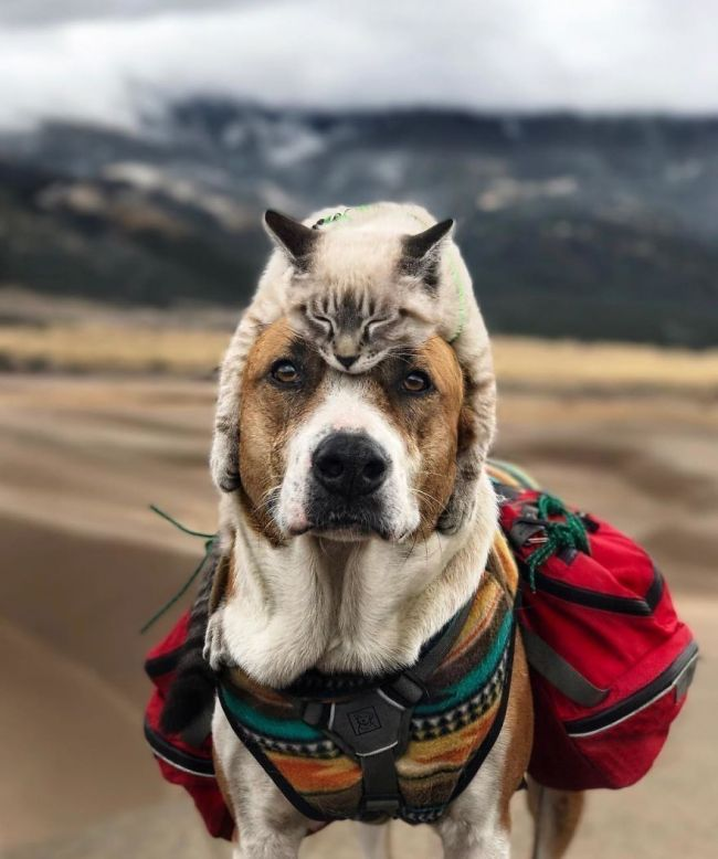 Henry y Baloo viajan con sus dueños por el mundo