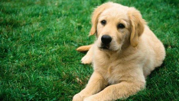 Como-Mantener-a-Mi-Perro-Fresco-en-Verano