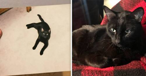 La valiente historia del gatito pantera que se perdió y volvió a su casa, ¡después de 5 años!