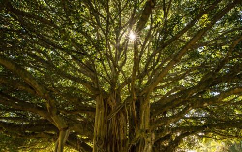 Conoce al hombre que plantó 11 mil árboles en Indonesia