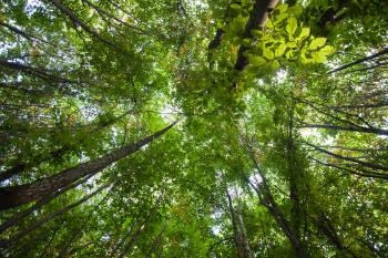 día del árbol argentina