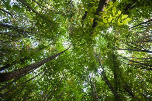 En este parque podrás caminar entre la copa de los árboles