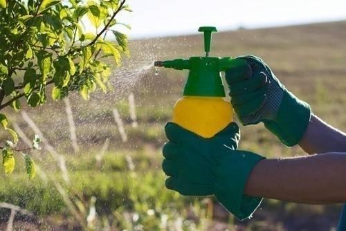 Encuentran relación entre el uso de pesticidas y el aumento de las malformaci..