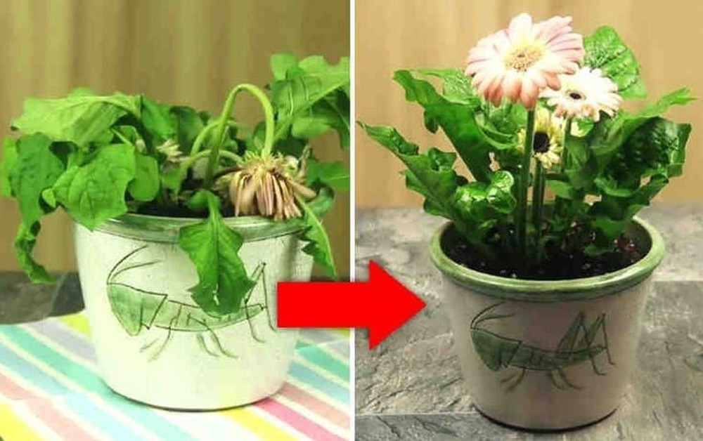 truco para revivir plantas