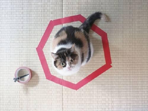 Un juego que puedes hacer con tu gato