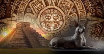 El perro azteca