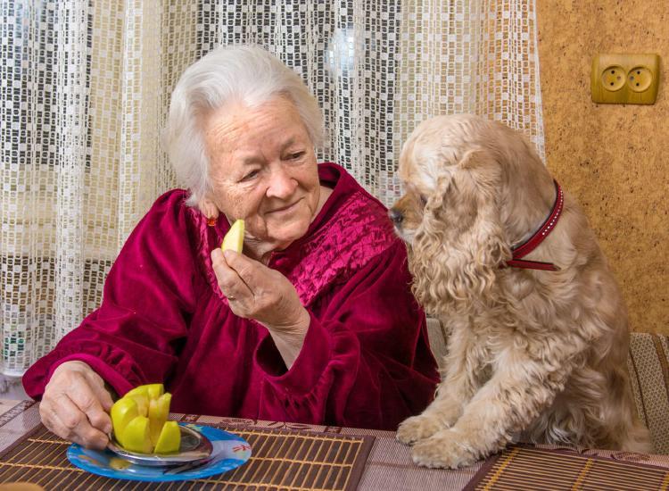 adultos-mayores-perros