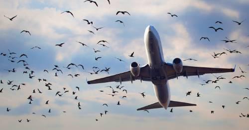 La desigual batalla que las aves están perdiendo contra los aviones