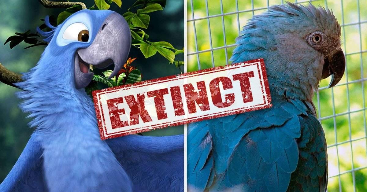 """El guacamayo \""""Blu\"""" de la película Río se ha extinto de su hábitat natural"""
