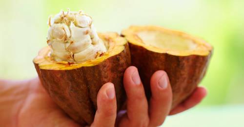 El cacao también es un superalimento: conoce sus propiedades