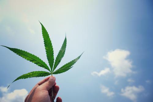 Un componente del cannabis podría ser una buena opción para suplir antibióticos