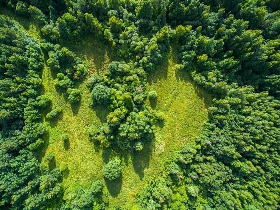 Descubren que en el mundo hay un 9% más de bosques de lo que se creía