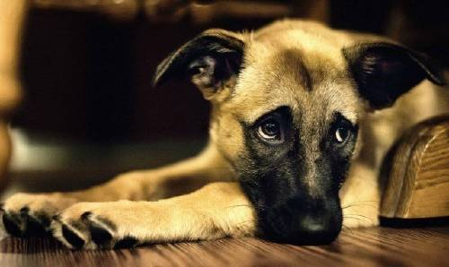 Revelan lo que sienten los perros antes de morir: es desgarrador pero necesitamos saberlo