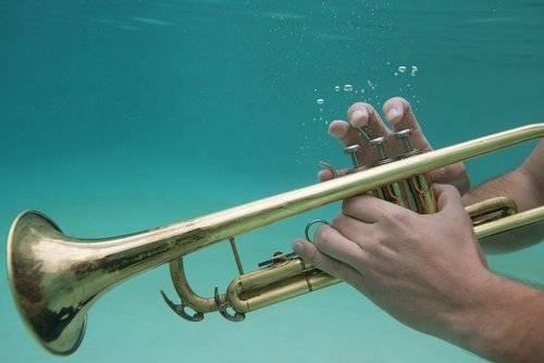 Los tiburones prefieren escuchar jazz que música clásica