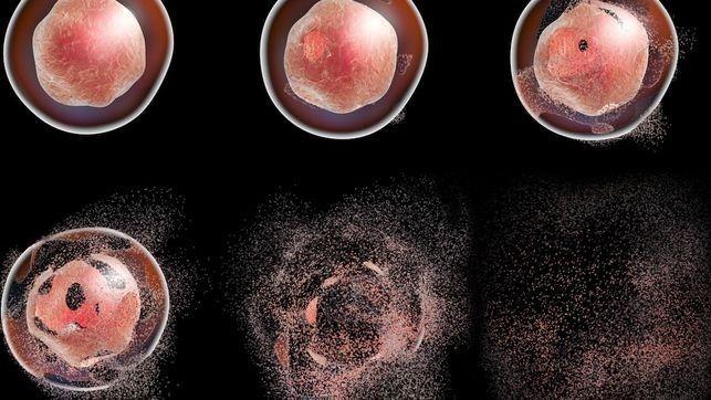 La autofagia se ha relacionado con proliferación, diferenciación, respuesta inmune contra patógenos