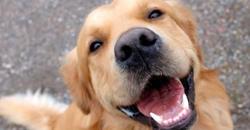 La ciencia demuestra que tu perro puede adivinar la hora