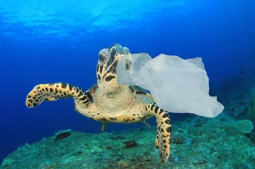 Esta es la razón por la cual los animales marinos comen plástico