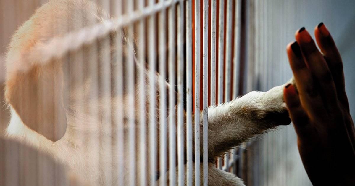 El Reino Unido prohibió la venta de perros y gatos cachorros en tiendas