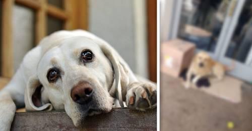 Este perro espera incasablemente a su dueño en el hospital, sin saber que falleció