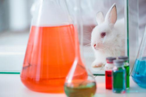 experimento prueba cosmeticos animales