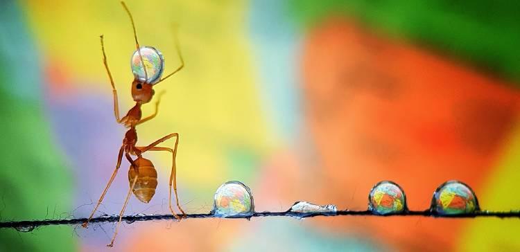 ant balancing