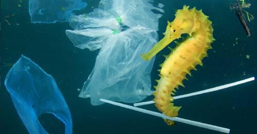 El proyecto más grande para limpiar el océano está a punto de ponerse en marcha