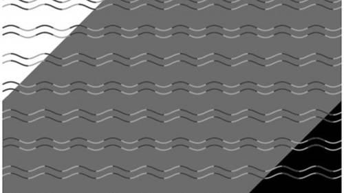 ¿Cuántos tipos de líneas ves? La respuesta te sorprenderá