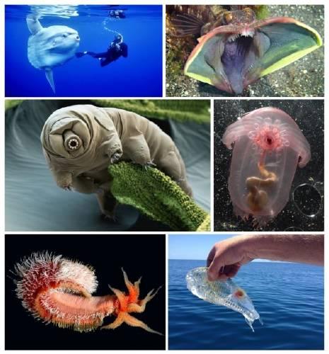 27 Increíbles criaturas del océano que parecen de ciencia ficción
