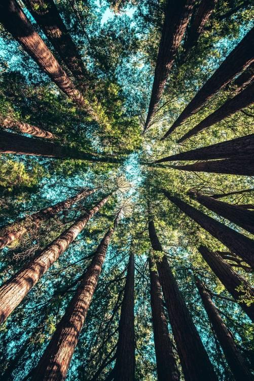Los mayores proyectos de reforestacion