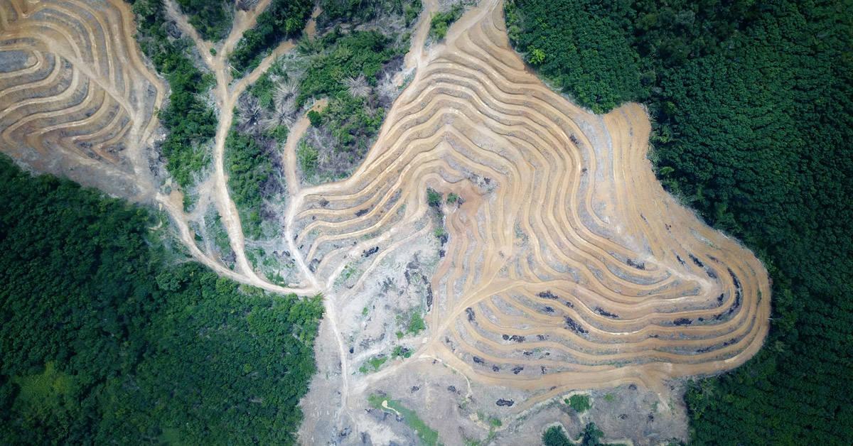 Alarma en el mundo por la deforestación en Brasil