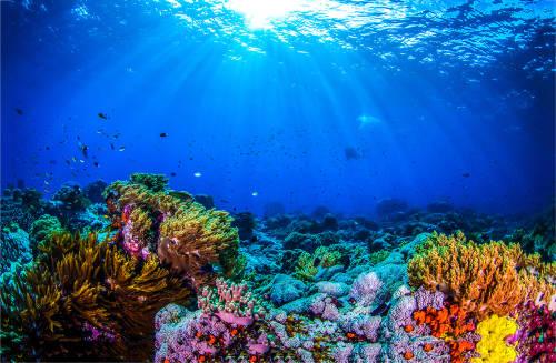 Coral Gardeners: adopta un coral y brinda una nueva vida al arrecife