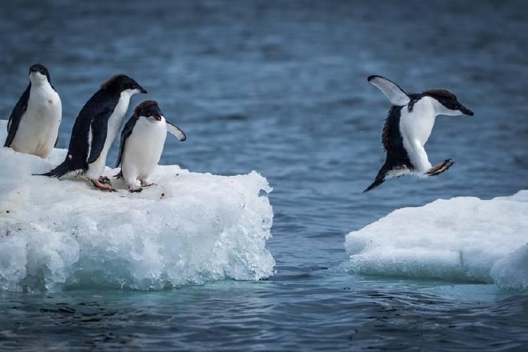 pinguinos hielo