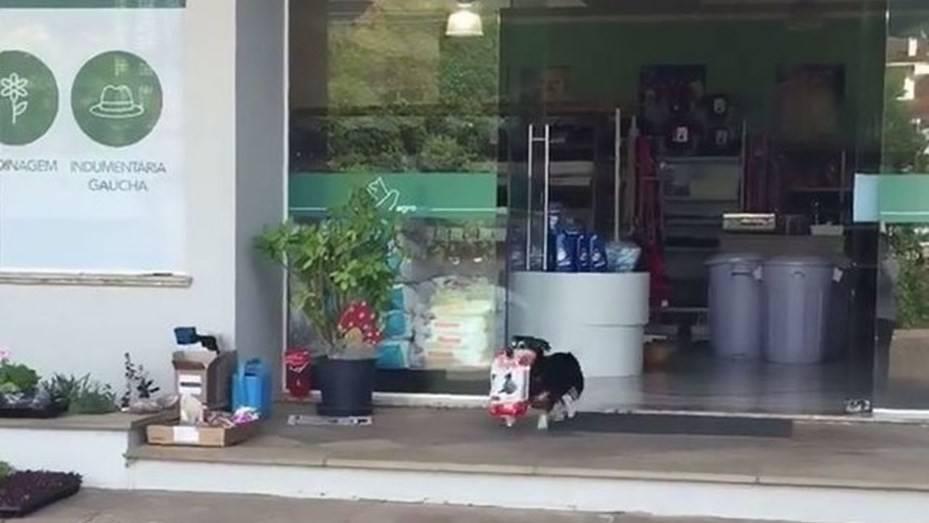 Mira lo que este perro puede hacer por sí mismo y quedarás con la boca abierta