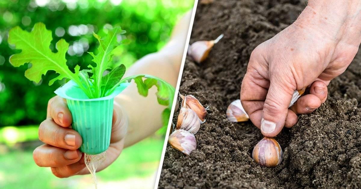 Qué sembrar en diciembre en ambos hemisferios