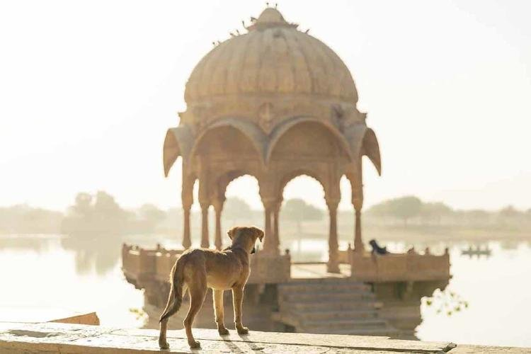 perros india3